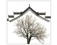 蔡龙---徽居。作品拍摄于皖南的一个山村,站在山坡上放眼望去,那一株株梨树漫山遍野,白茫茫的一片,像起伏的波浪。在徽派建筑群的印衬下,展现眼前是一幅美丽的画卷。