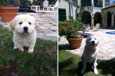 21 Fotos Do Antes E Depois De Cães Com Seus Donos