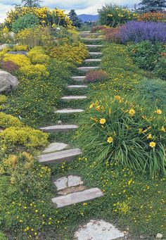 hillside steps -Sedum, daylilies, nepeta, thyme, yellow flowered strawberry, gallardia, oenerthera