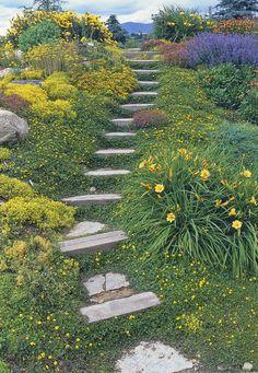 Hillside steps - Sedum, daylilies, nepeta, thyme, yellow flowered strawberry, gallardia, oenerthera