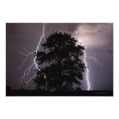 Lightning Strikes In The Sky Behind A Tree Poster