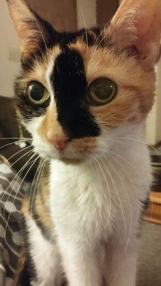 My baby! #Kitty #Cat #Meow