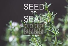 * Seal, Essential Oils, Harbor Seal, Essential Oil Uses, Essential Oil Blends