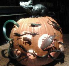'Pin-tober' Viewer Photo Submissions! | AndersonCooper.com Pumpkin Decorating, Submissive, Pumpkin Carving, Creepy, Halloween, Decoration, Fun, Crafts, Decor