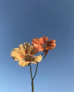 @TrashySoda Nature Aesthetic, Flower Aesthetic, Blue Aesthetic, Aesthetic Photo, Aesthetic Pictures, Flower Shower, Pretty Photos, No Rain No Flowers, Aesthetic Wallpapers