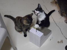 Two kittens were playing.