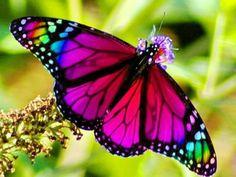 Que belleza! Este animalito tan destacado y colorido, sólo un poco de tiempo atrás era una oruga!!