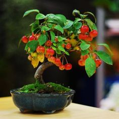 ☺♥What do you think about this pretty #bonsai tree?♣●       #BonsaiInspiration