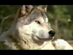"John Denver's ""Yellowstone"" - his last song."
