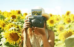 photography and sunflowers...2 of my fav things!! <3 <3