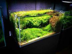 Greenaqua shop aquarium