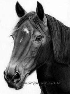 Emmy - Commission Horse. on Behance