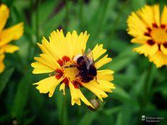 cool Fotografie »o. T. 17 @ Flowers«,  #Blumen #Tiere