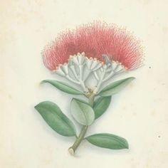 Te Ara Encyclopedia of New Zealand Key Tattoos, Skull Tattoos, Foot Tattoos, Sleeve Tattoos, Tatoos, Fairy Tattoo Designs, Skull Tattoo Design, Flower Tattoo Foot, Flower Tattoos