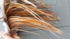 12 Long Fine Colored Red and Grey Rooster Hackle by Furries