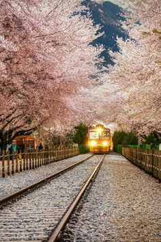 Florida entrada del tren en Japon