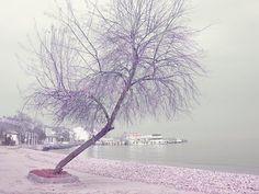 Beach photographyPurple TreeMisty by MorrisClassics on Etsy, $15.00