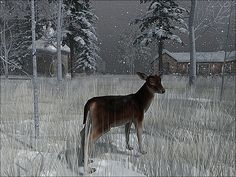 https://flic.kr/p/22sL5jY | BinemustSnow -  Doe Eyed Winter's Night | Visit this location at Binemust in Second Life