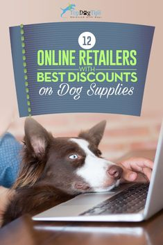 12 Online Dog Supplies Retailers With Best Deals Until 2016's End. It's a good time to stock up for the coming months, purchase inexpensive items for an animal shelter, or finally commit to making that big purchase that's never been affordable before. #dogs #shopping #supplies #dog #pet #retailers #vendors #amazon #best #list #discounts #sale #cheap #affordabledogsupplies