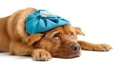 ......sono ammalata....... 22/12/2013
