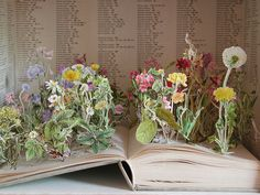 altered book with plants growing out of it (via frusilerias)
