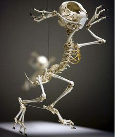 Animatus Realistic Skeletons Of Classic Cartoon Characters - Skeletons favourite childhood cartoon characters