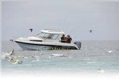 Image News, Fishing, Boat, Spring, Dinghy, Boats, Peaches, Pisces, Gone Fishing