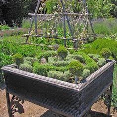 Mini Knot garden!!!