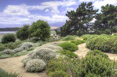 Seaside Garden, Meadow Garden, Dry Garden, Coastal Gardens, Balcony Garden, Garden Paths, Drought Tolerant Garden, Natural Garden, Private Garden