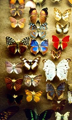 Butterfly Collection on Linen