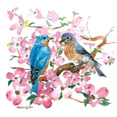 Art print  Bluebird in dogwood blossoms by annalee377 on Etsy