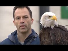 Dutch police are training eagles to take down rogue drones. Yes, really. - The Washington Post