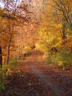 Smell the Autumn leaves Decorah Iowa, Palisades Park, Wisconsin, Michigan, Winding Road, Back Road, Take Me Home, Fall Photos, Far Away