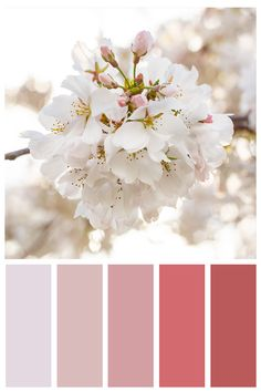 Cherry blossoms are my favorite! Such a range of color. This photo is one of 6 cherry blossom photos featured in my Cherry Blossom Note Card Set. Blank inside, perfect for your personal messages. Set comes with white envelopes. Color Schemes Colour Palettes, Colour Pallette, Color Combos, Color Balance, Design Seeds, Colour Board, Color Swatches, Pantone Color, My New Room