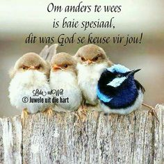 cute little birds animals All Birds, Little Birds, Lekker Dag, Adorable Quotes, Goeie More, Afrikaans Quotes, Friendship Day Quotes, Animal Antics, Hindi Quotes