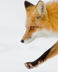 Photograph Prey in view by Maxime Riendeau