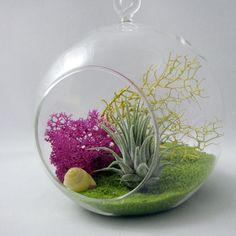 Lime // Air Plant Terrarium. $25.00, via Etsy.