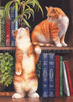 chrissie snelling cats - Google Search