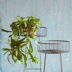 Round Basket Plant Stands, Terrain