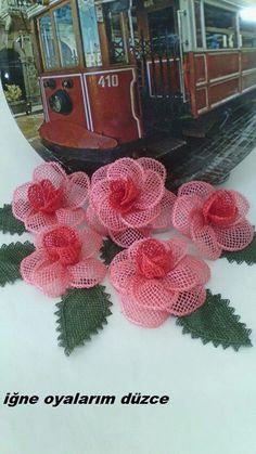 Pembiş güllerim