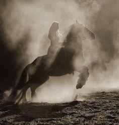 i wanna do a photoshoot with a horse!