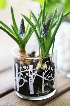 Our beautiful patterned Jar Candles make the perfect jar to plant little spring-time bulbs in! When you have finished burning your candle, don't just throw the jar away! :)