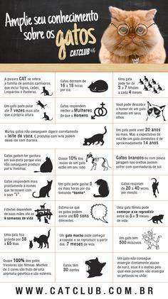 Amplie seus conhecimentos sobre os gatos