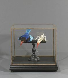 Kingfisher and his skeleton, historic taxidermy. for Conrad Charleston Pablo Picasso, Strange Fruit, Museum Displays, Natural Curiosities, Weird Science, Weird World, Prehistoric, Natural History, Fossils