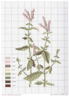 Gallery.ru / Фото #2 - Herbier - Mongia
