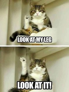 15+ Cat Memes Will Bright Your Day!! – KingdomOfCat