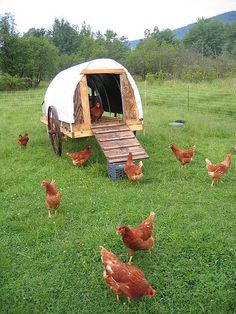 Covered Wagon Style Coop