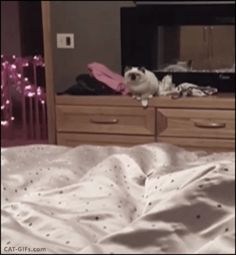 CAT  GIF • Epic cat jump FAIL (from chest of drawers to bed) haha
