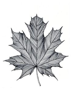 Maple Leaf Print of original Black or Green Pen and Ink DrawingYou can find ink drawings and more on our website.Maple Leaf Print of original Black or Green Pen and . Black Pen Drawing, Doodle Art Drawing, Black Pen Sketches, Sketch Pen Drawing, Sketching, Pencil Art Drawings, Art Drawings Sketches, Drawing Designs, Lettering Brush