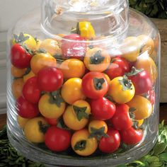 Clear glass jar filled with faux tomatoes.  Product: Faux botanical arrangementConstruction Material: Glass...